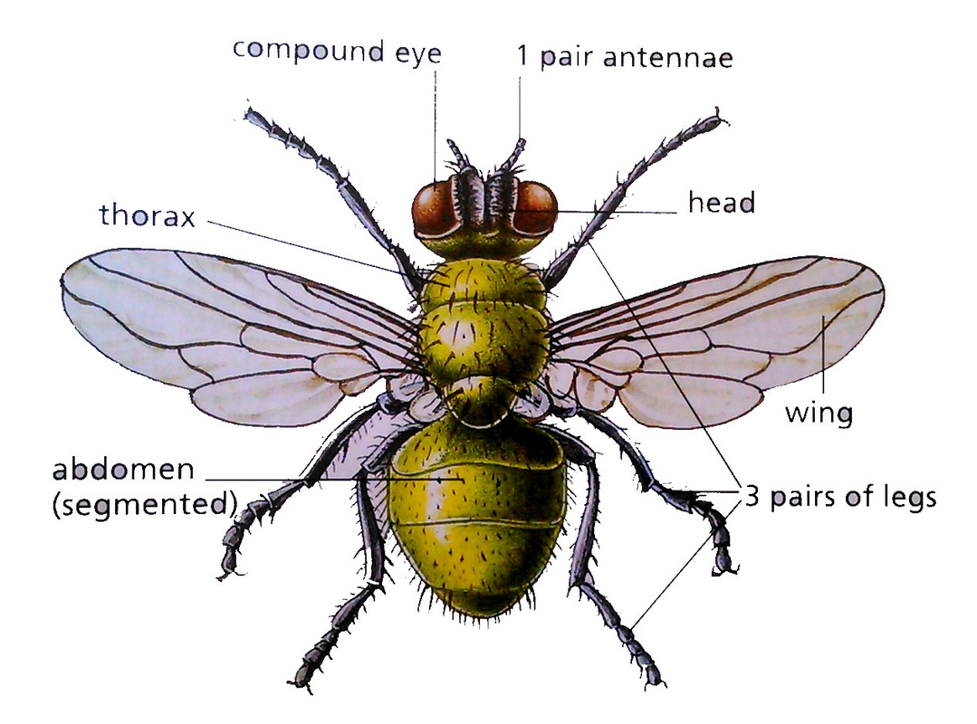 1.2._Classification and diversity of living organisms - BIOLOGY4IGCSE